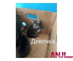 котята Каспийск