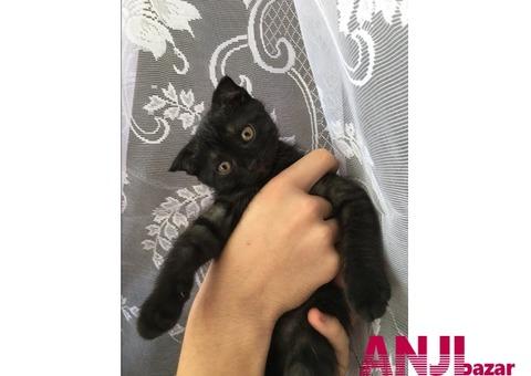 продам котенка, в хорошие руки.